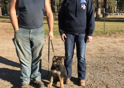 veteran service dog training for ptsd support